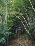 bosco_di_bambu.jpg