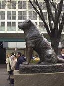Hachikou